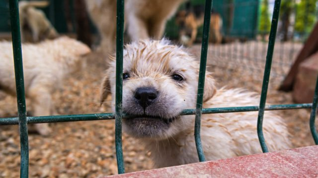 How to spot a puppy mill