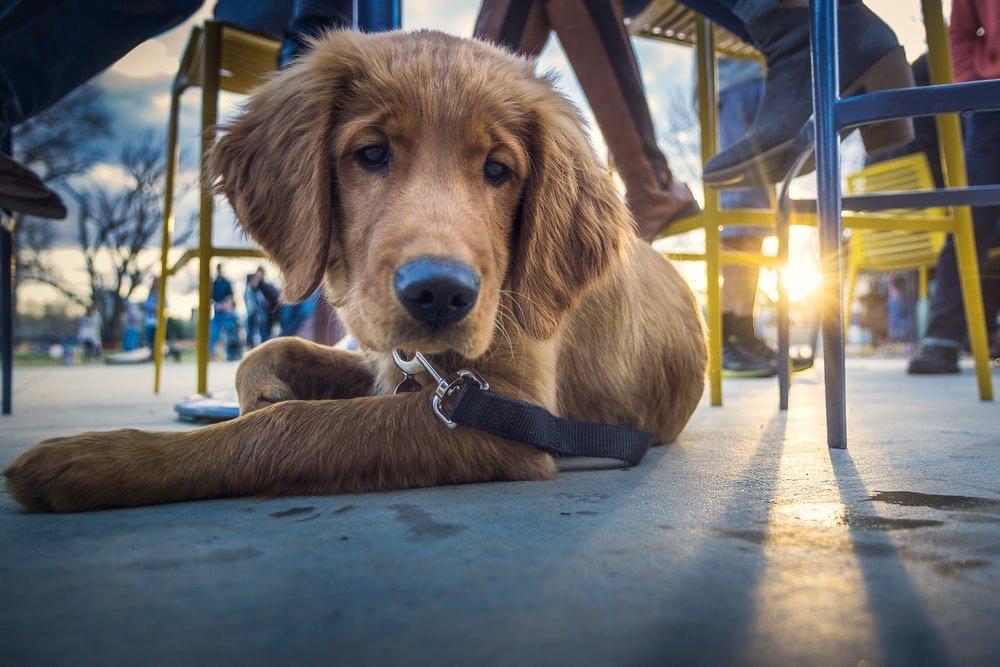 Dog Friendly Restaurants in Birmingham AL